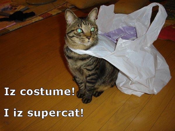 [Image: CatCapeBag.jpg]
